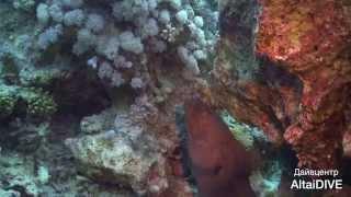 Египет под водой 2013(Дайвинг в Египте. Дайвцентр AltaiDIVE www.moidiving.ru, mail@moidiving.ru Автор: Павел Збарах., 2013-01-21T15:41:35.000Z)