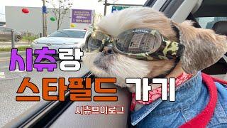 [시츄 브이로그] 강아지 선글라스 ㅣ 퇴근 후 놀아주기…
