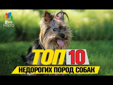 Топ 10 недорогих пород собак | Top 10 Inexpensive Dog Breeds