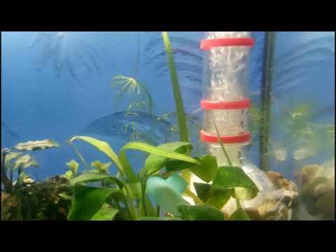 Мой аквариум раковник на 24 литра. После запуска. Мексиканский карликовый рак. Содержание два вида.