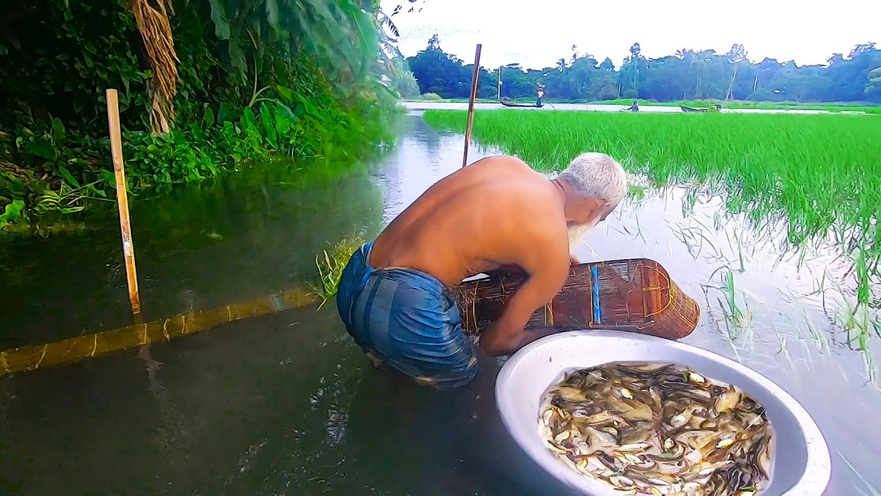 Naturally Village Old Man Fish Hunting By Bamboo Trap | Best Fishing Of Country...