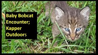 Amazing Encounter with Baby Bobcats and Mother Bobcat 08-14-18