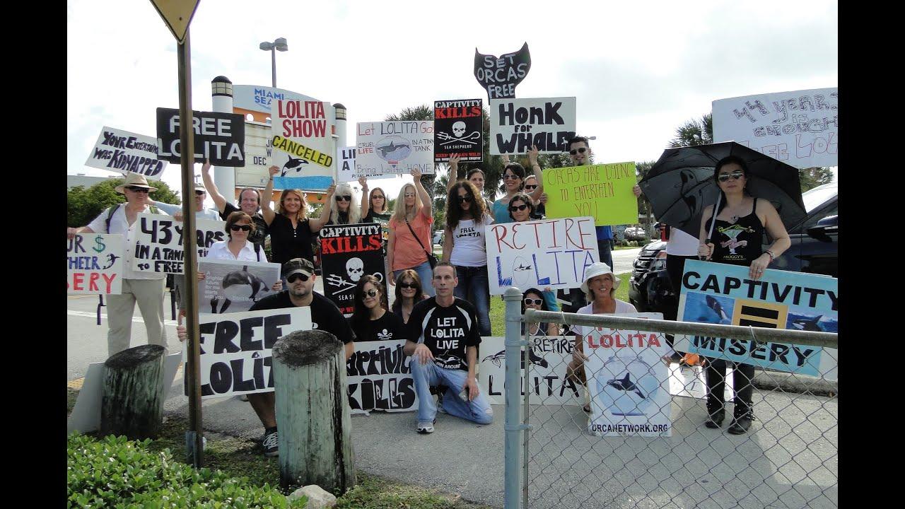 Miami Seaquarium Protest Youtube