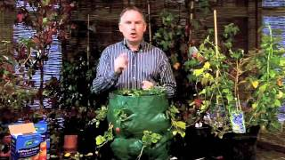 How To Grow Strawberries | Growing Strawberries | Killarney Garden Centre
