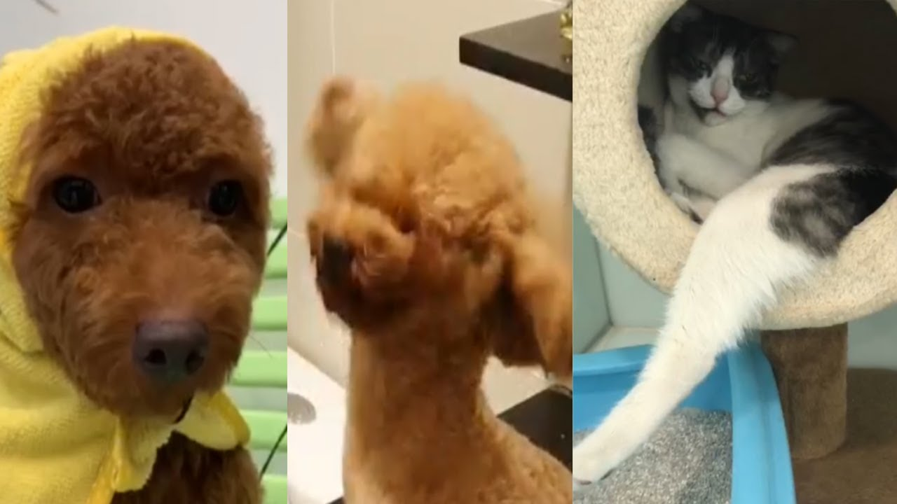 The Funny Moments In The Video Will Make You Unable To Stop Laughing #1   Cute Animals Compilation