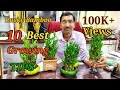 Lucky Bamboo Caring Tips