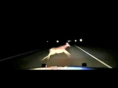 Dash-cam shows deputy sheriff hitting deer at 114 mph