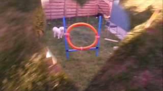 Nelly tränar agility på gården