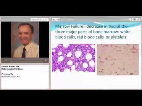 Aplastic Anemia 101: Understanding the Basics