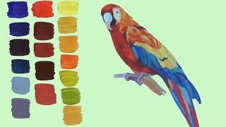 Уроки рисования. Как нарисовать попугая гуашевыми красками. Смешивание гуашевых красок(Из всего многообразия птиц, живущих на нашей красивой планете, попугаи самые часто живущие в наших домах..., 2014-11-12T16:09:12.000Z)