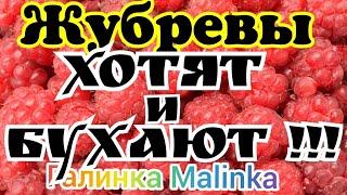 Жубревы Life Vlog /Хотят и Бухают /Обзор Влогов /