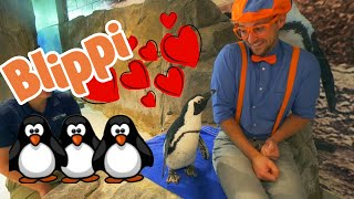 Learning Sea Animals With Blippi at The Aquarium | Educational Videos For Toddlers