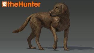 Hunting Dogs - Thehunter 2015  - Labrador Retriever Is Coming Soon! En/1080p/60fps