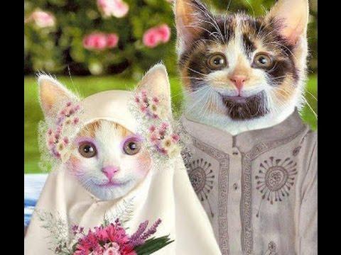 Gambar Kucing Gokil Creativehobbystore