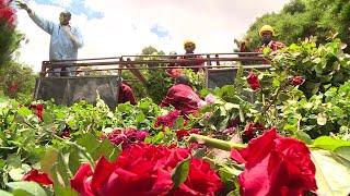 'It's not rosy': Kenya's flowers rot amid virus slowdown   AFP