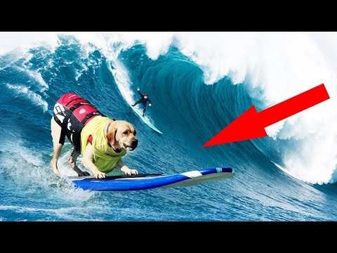10 best trained and SMARTEST DOGS on earth!