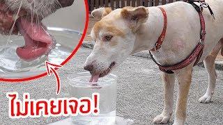 พึ่งเคยเห็น!! หมาใช้ลิ้นแบบนี้กินน้ำได้ไง?!! ในสโลโมชั่น!!