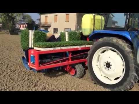 Trapianto pomodori 2015 youtube for Trapianto pomodori