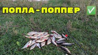 Попла поппер Рыбалка на ПОПЛА ПОППЕР Батл Кукуруза против ОПАРЫША