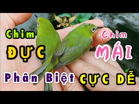 Phân Biệt Chim Trống Mái Qua Màu Lông  Chim Khuyên Cực Kỳ Đơn Giản - Distinguish Male Birds | KTB