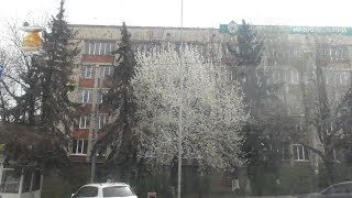 Full HD. Spring. Tram Tatra KT4SU No.219 (route No.6). Window view....