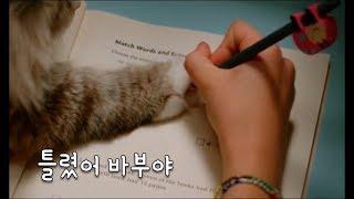 수학을 가르쳐주는 고양이..?