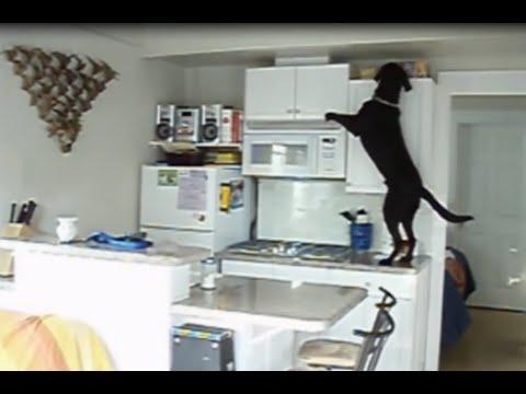 ¿qué hacen los perros solos en casa?