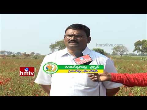 High Yielding Dairy Cattle Feed | Importance Of Organic Vegetable Farming | Nela Talli | HMTV