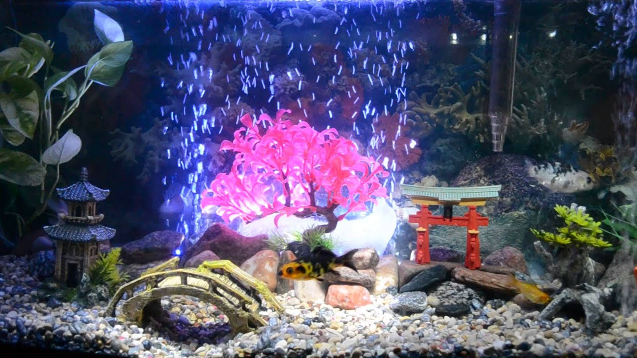 Asian inspired aquarium decoration youtube for Asian fish tank decorations