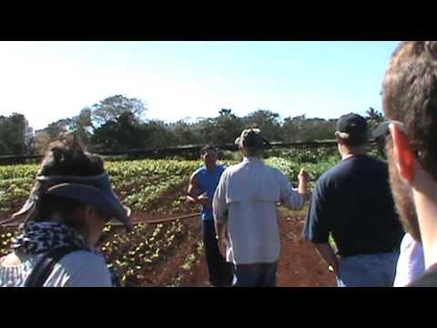 Cuba, Organic Farm, 2012