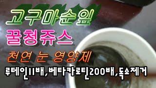 고구마순잎 꿀청영양쥬스 눈영양제활성산소제거제 항암효과 …
