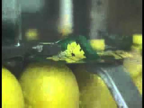 Jif Lemon Production