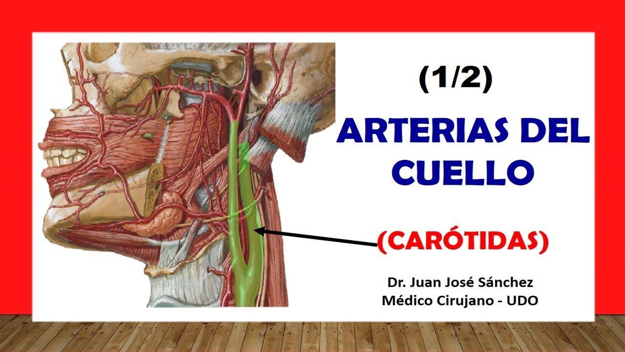 Cuello 4 - Arterias del Cuello 1, Carótida. Fácil y Sencilla - YouTube
