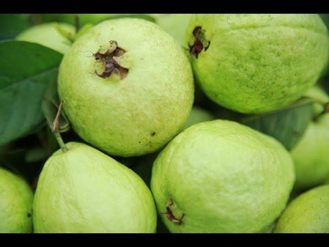 Công dụng của quả ổi – Giá trị dinh dưỡng và tác dụng của trái ổi