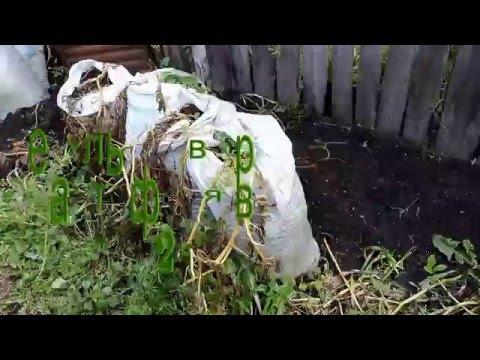 Результат выращивания картофеля в мешках 2015г