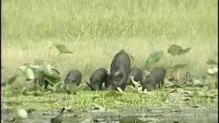 Aransas and Matagorda Island National Wildlife Refuges