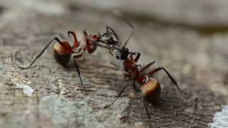 Insects of Thailand (Kaeng Krachan National Park)