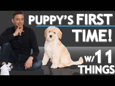Puppy Experiences 11 Different Things for the FIRST TIME!