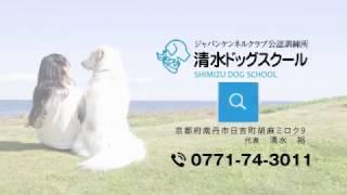 犬のしつけなら京都の清水ドッグスクール。犬のしつけに関してどのよう...
