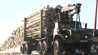 видео Работы на лесном участке осенью. Подготовка лесного участка к зиме.