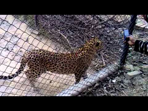 kanpur zoo live video