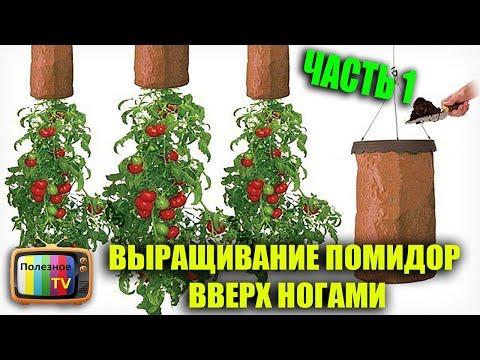 Как сажать помидоры вверх корнями видео