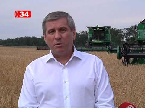 Подсолнух - применение регуляторов роста, Донецкая область .
