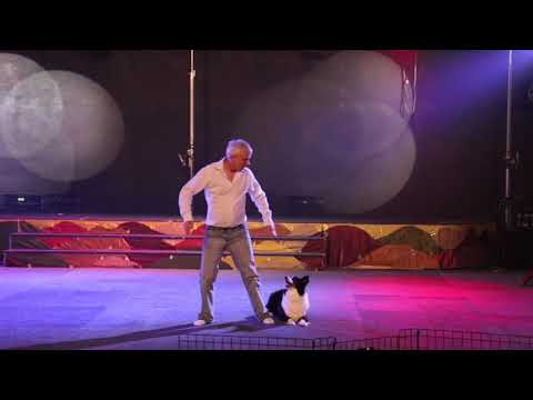 Ray Underwood, Dog Trainer,  Performs to 'Wild Horses' with his border collie, Magic,
