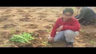 زراعة حبحر شقراء الشهير في مزرعة الوسيطى