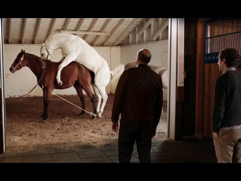 Silicon Valley | Horse Sex Scene (Season 3 Episode 2, Audio Fixed)