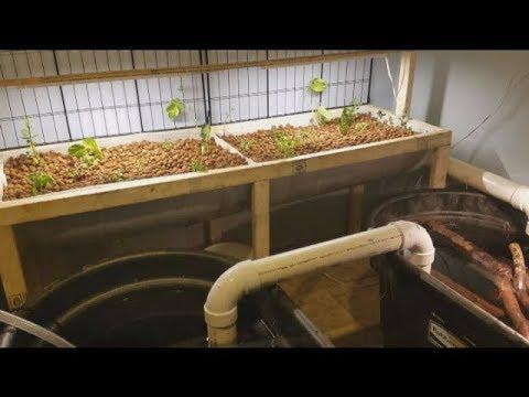 Building An Indoor Aquaponics System Part 2
