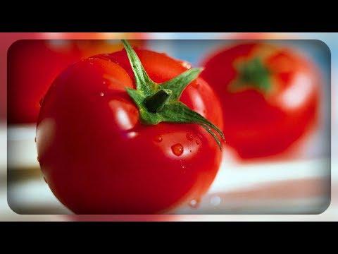 Ранние сорта томатов для открытого грунта | открытого | валентина | хорошие | томатов | огорода | вкусные | томаты | семена | ранние | грунта