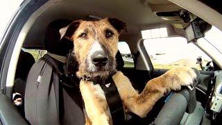 Поразительные способности собак - Топ 5 - Самые умные собаки в мире - Талантливые собаки и их породы