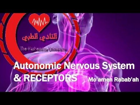 Autonomic Nervous System and Receptors